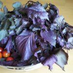 生しば漬けの作り方!超本格的に材料はシンプルにナス・塩・赤紫蘇のみ